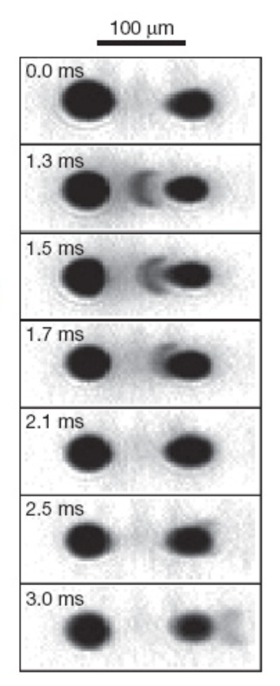 Opnamen van de reizende quantuminformatiegolf. In het laatste plaatje is te zien dat hij door het tweede BEC-wolkje heen is geschoten. (Naomi S. Ginsberg et al., Nature)